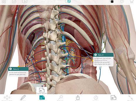 Erfassungssoftware / 3D-Visualisierung / für Ausbildung / Anatomie ...