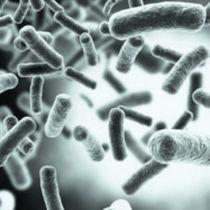 Testkit für Herpes / HSV / für DNA / für Echtzeit PCR
