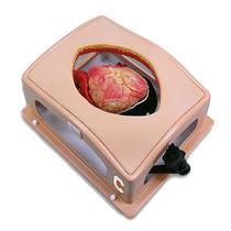 Simulator für Thoraxchirurgie / für Herzchirurgie / Erwachsene / Brust
