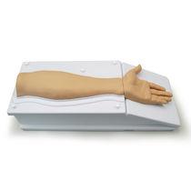 Simulator zum Sezieren / Anatomie / Arm