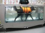 Veterinär-Laufband / Unterwasser / für Hunde