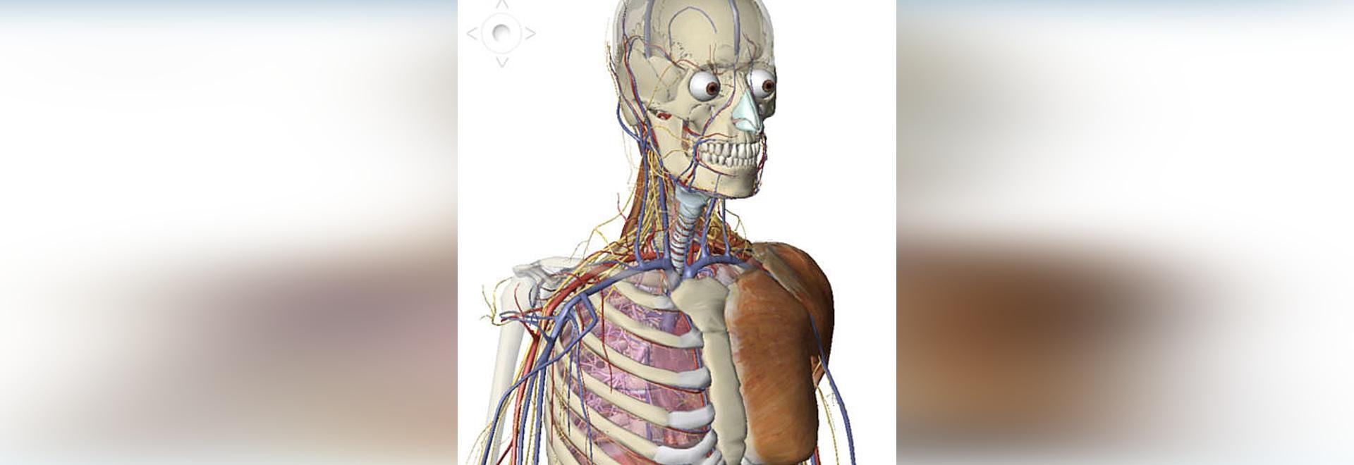 Neu: Menschlicher Anatomie-Atlas des sichtbaren Körpers durch ...
