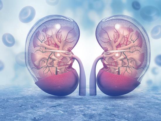 Nierenerkrankung anfällig für gerichtete Nano-Therapie