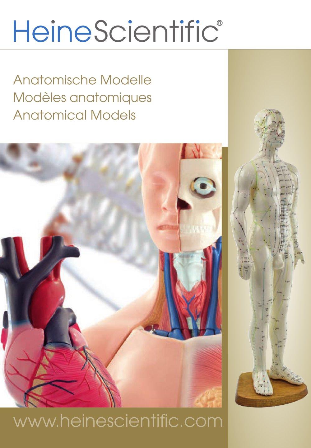 Ziemlich Menschliche Anatomie Modell Für Kinder Bilder - Anatomie ...