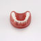 Anatomisches Modell / GebissPE-PRO020Nissin Dental Products Inc.
