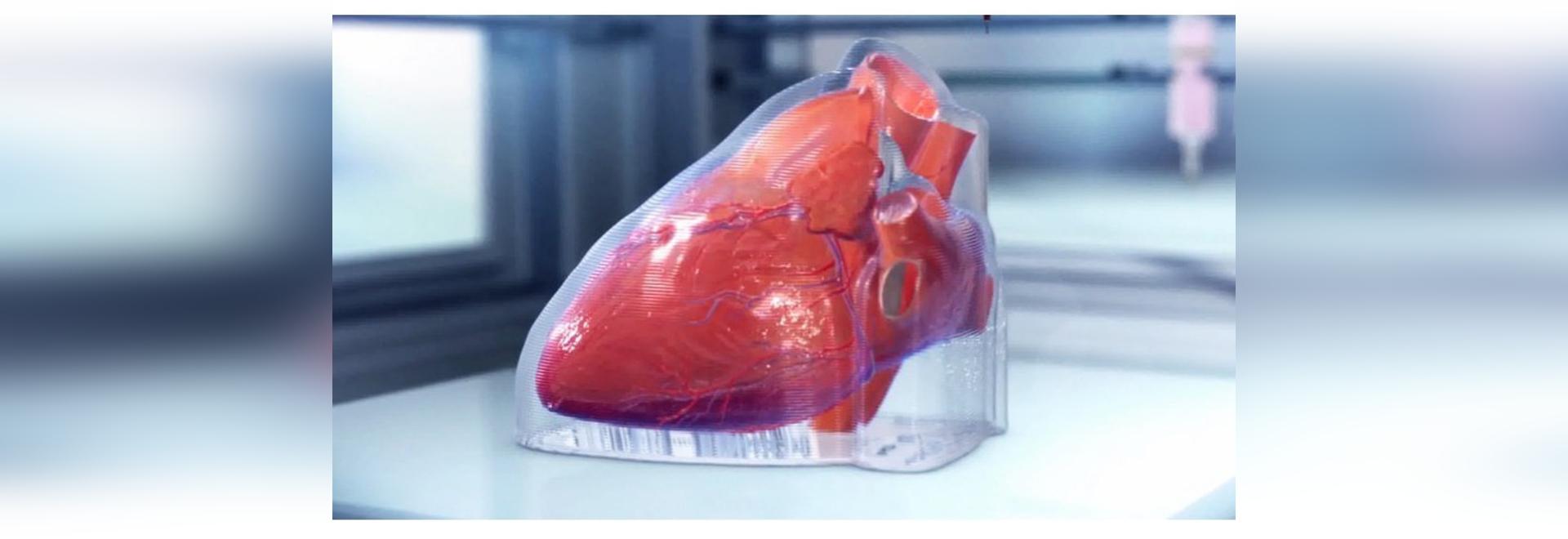 das in Chicago ansässige Biotech-Unternehmen hat ein miniaturisiertes menschliches Herz in 3D gedruckt