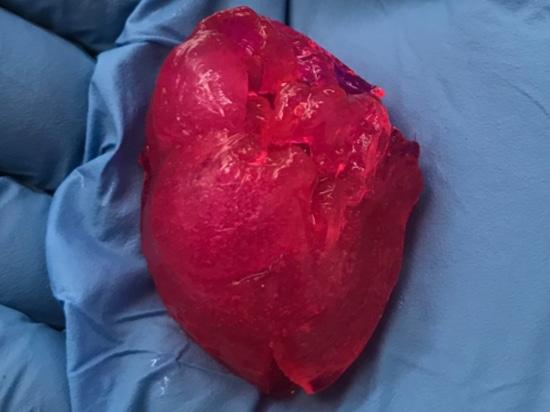 BIOLIFE4D bioprint druckt zum ersten Mal in den USA das kleine menschliche Herz.