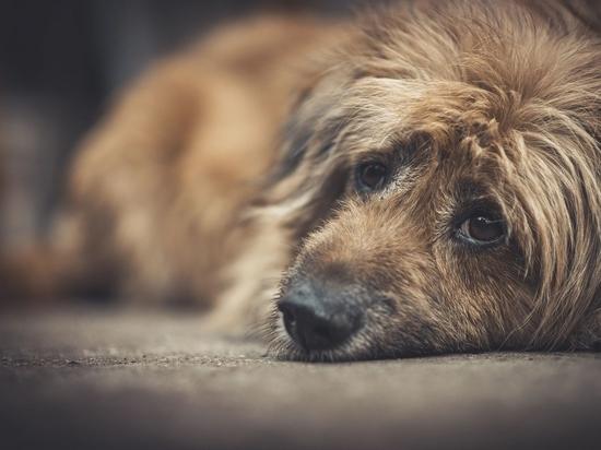 FDA genehmigt unter Vorbehalt die erste orale Behandlung von Lymphomen bei Hunden