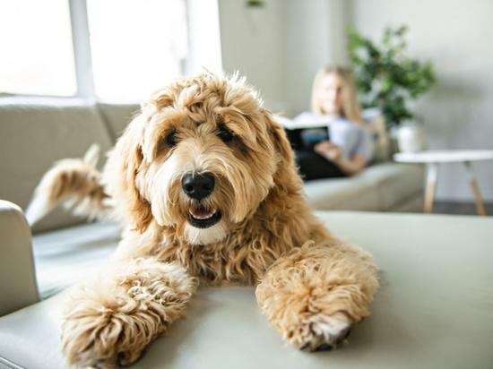 Neuer Krebsvorsorge-Test für Hunde jetzt verfügbar