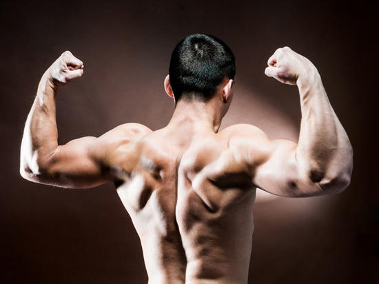 Synthetisches mikrobielles Verfahren produziert Muskelfasern, die stärker sind als Kevlar
