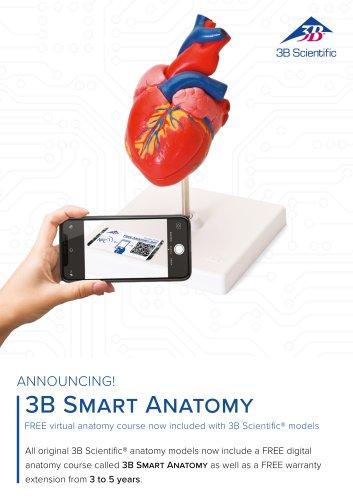 3B Smart Anatomy